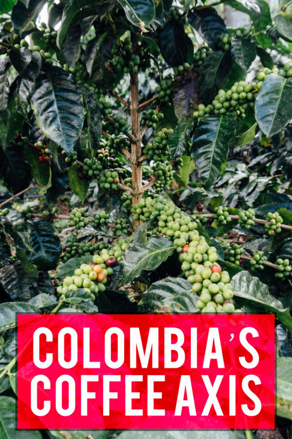 Exploring Colombia's famous Coffee Triangle - Eje Cafetero - where to do and what to see...